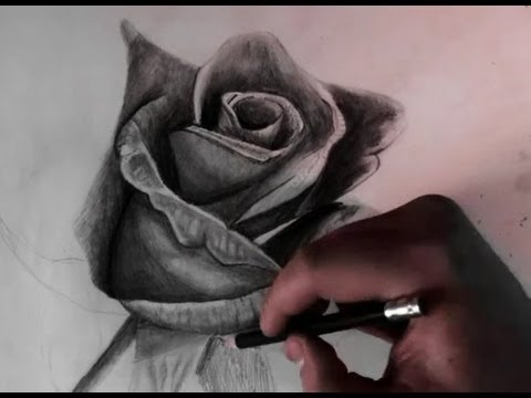 Drawn rose real rose Realistic  ) Drawing YouTube
