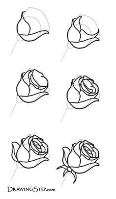 Drawn rose real rose Roses petals +real My on