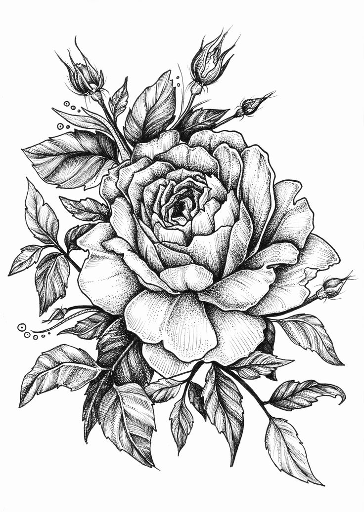Drawn rose real rose Tattoo rose ideas Pinterest on