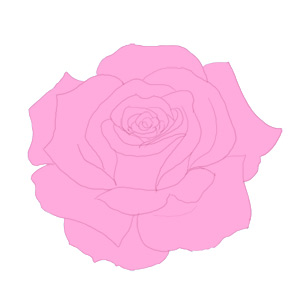 Drawn rose real rose By  Step Rose How