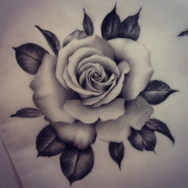 Drawn rose realistic Roses time look love I