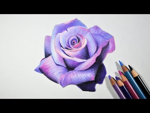 Drawn rose bush color shading YouTube Prismacolor step Step Draw