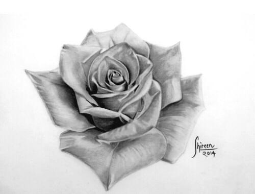 Drawn rose realistic Rose done rose Instagram Instagram