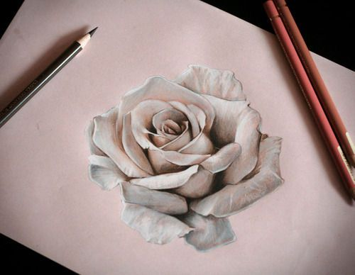 Drawn rose realistic Draw realistic to Drawings pencil