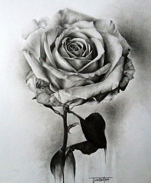 Drawn rose realistic Full rose http: Beautiful rose