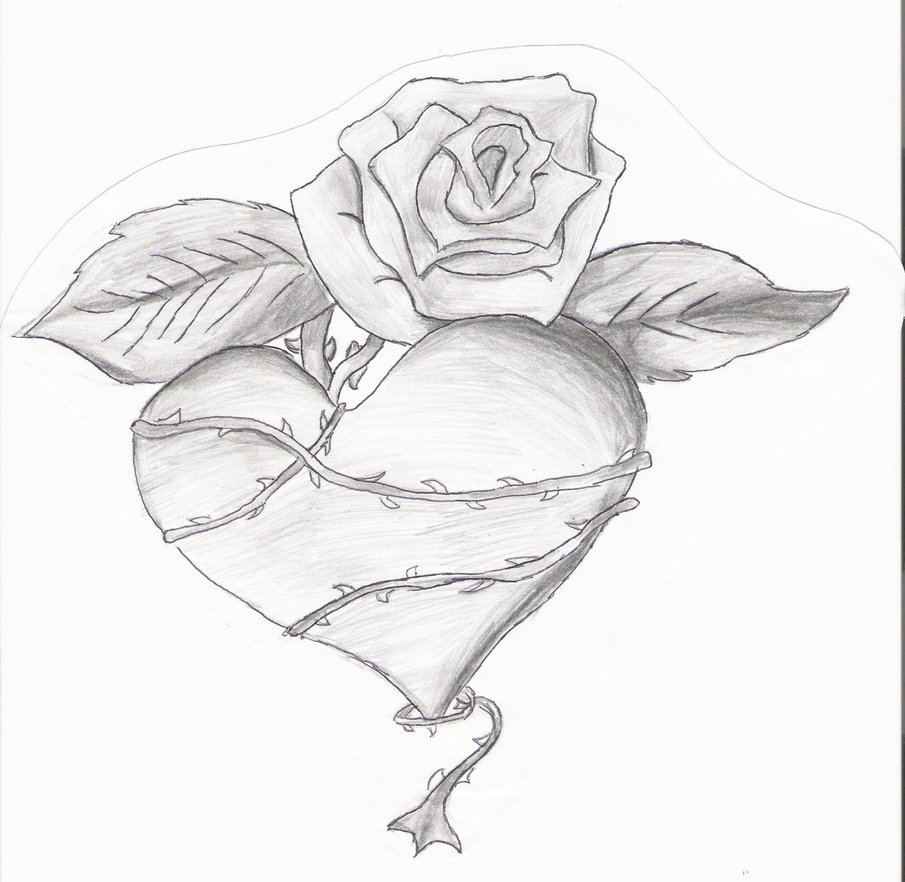 Drawn rose ribbon Drawings by on  Wrapped
