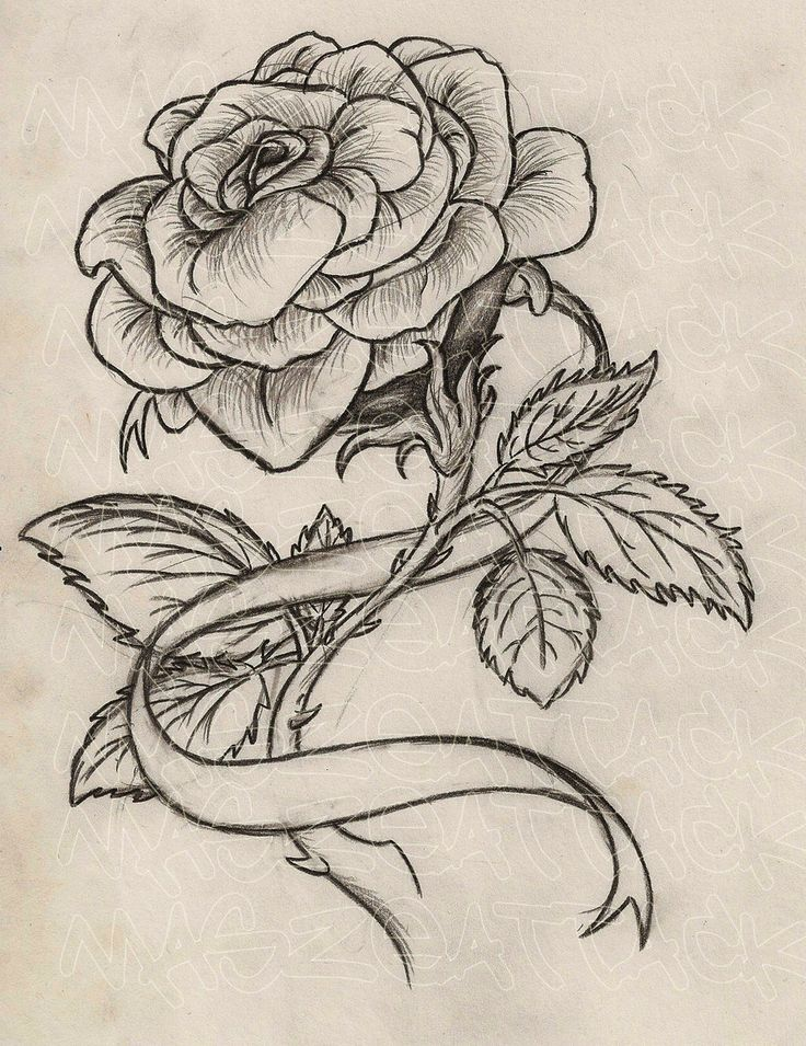 Drawn rose ribbon Tattoo on like on name