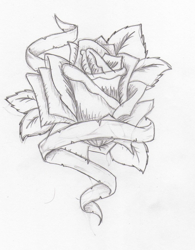 Drawn rose rose banner Lildevel94 favourites Tattoodesign: by DeviantArt