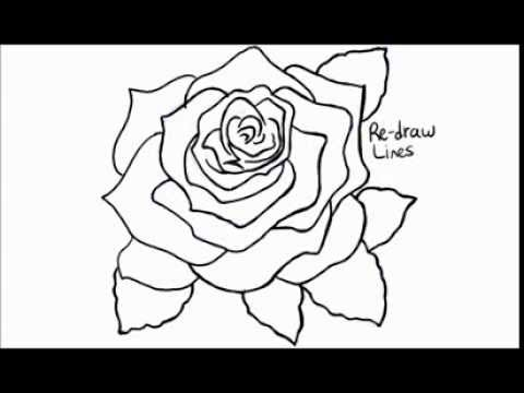 Drawn rose rose bloom Draw a Rose Bloom in