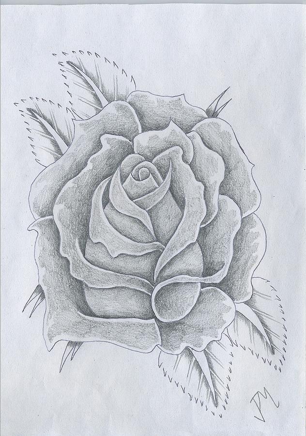 Drawn rose rose bloom Rose In Justin Bloom Rose