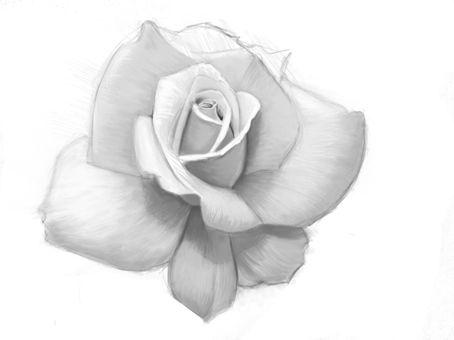 Drawn rose rose bloom Best rosas images  Pinterest
