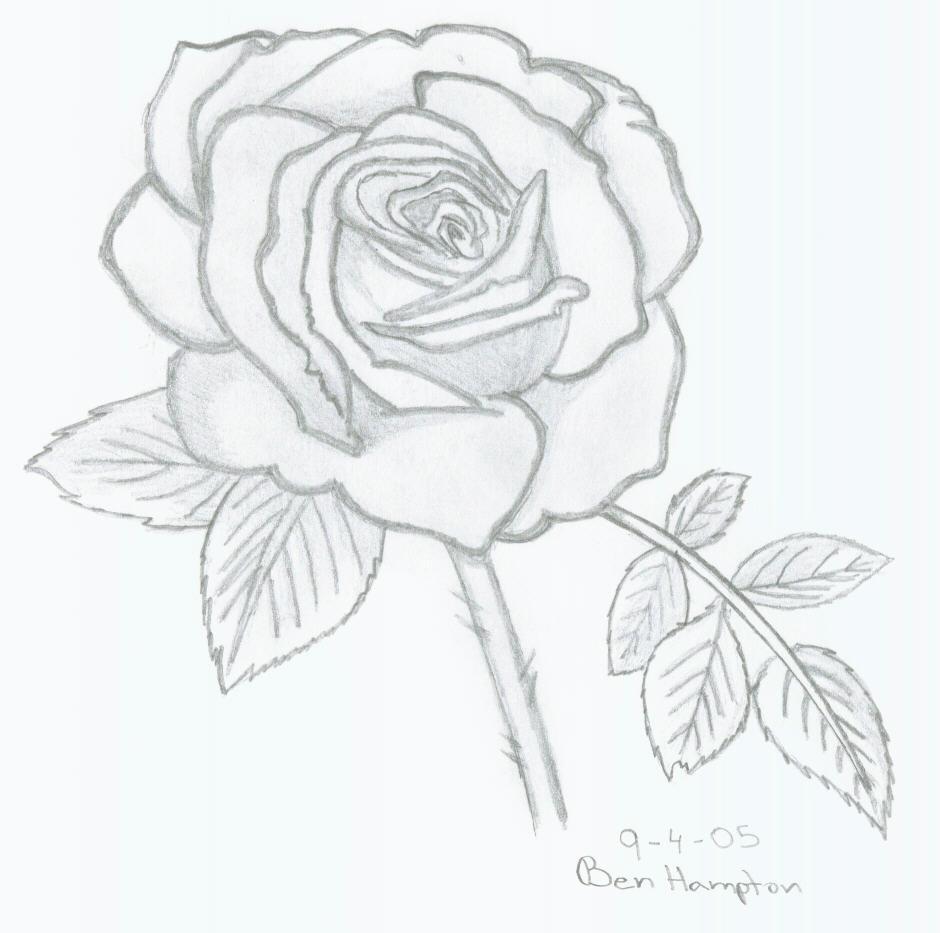 Drawn rose rose bloom Rose in on Bloom Rose