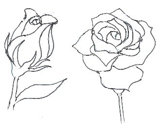 Drawn rose rose bloom Draw roses Draw stage to