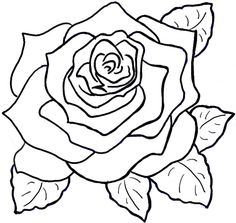 Drawn rose rose bloom Draw Roses How on by