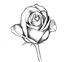 Drawn rose rose blossom How How roses ideas A