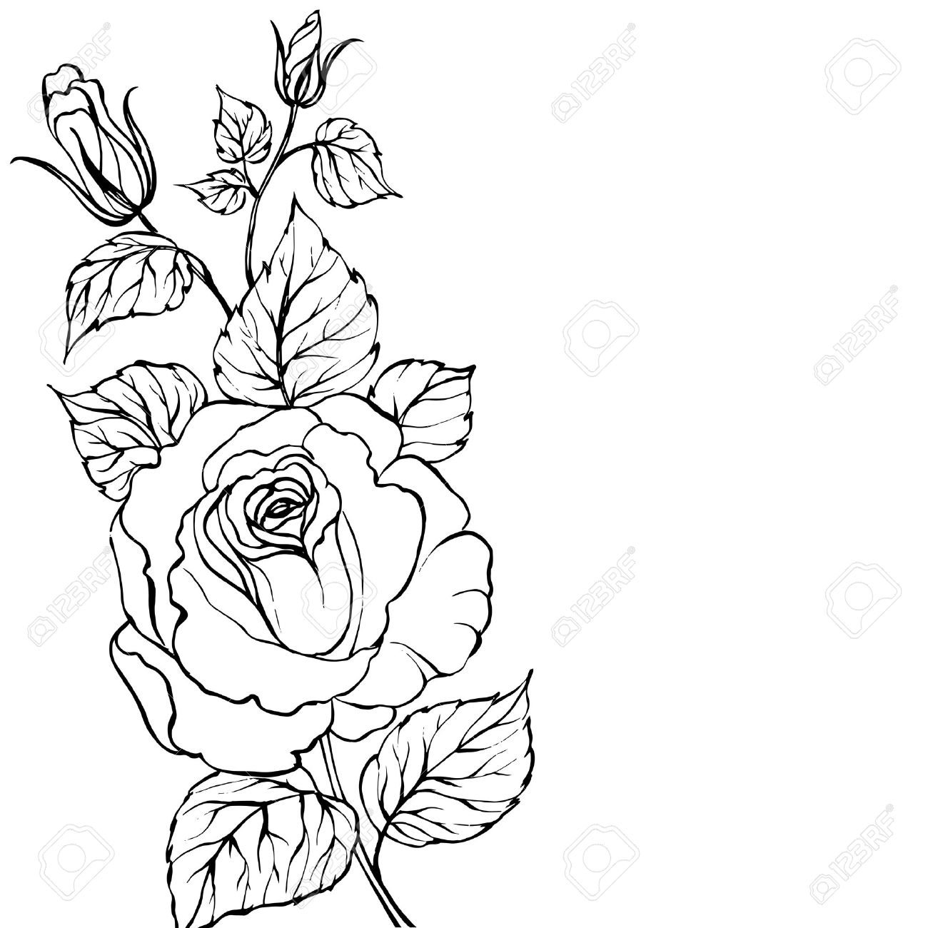 Drawn rose rose blossom Download  Drawing Outline Drawing