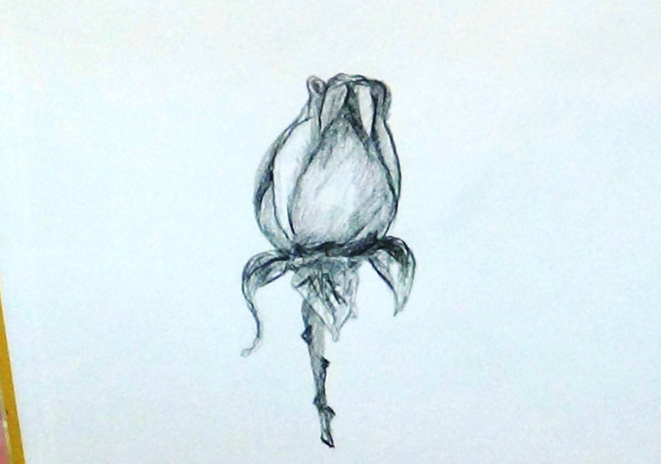 Drawn rose rose bud For A How To With