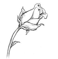 Drawn rose rose bud Your Rose sketching bud to