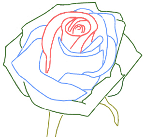 Drawn rose rose bud A How a step to