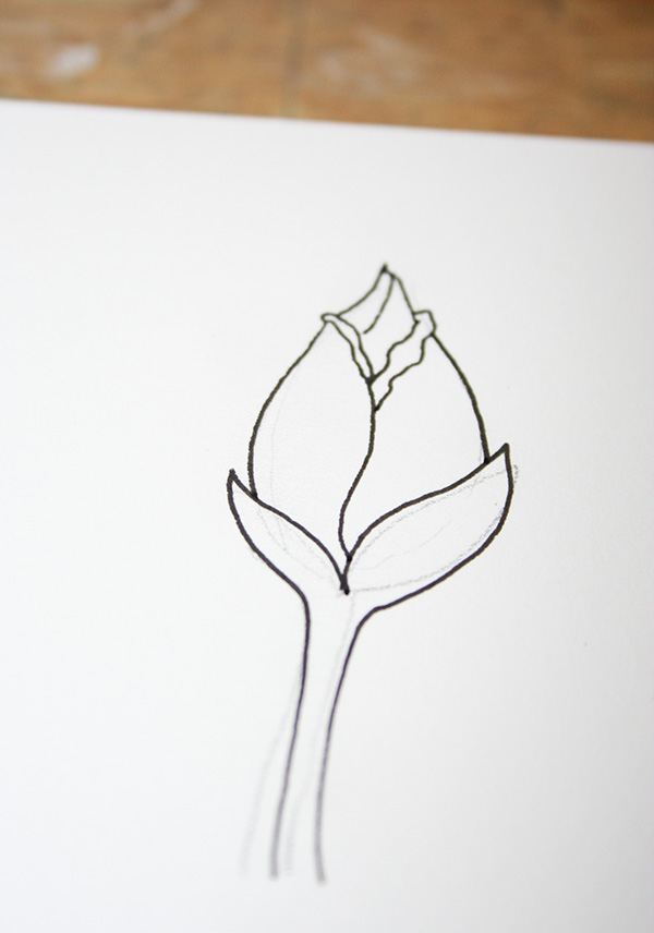 Drawn rose rose bud To Rose Rose buds How