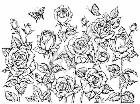 Drawn rose rose cluster Rose Cluster Inspiration Pinterest