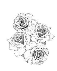 Drawn rose rose cluster White; Im cluster my arm
