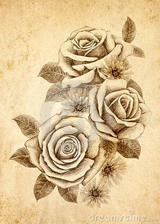 Drawn rose rose cluster Rose Freehand Download Million High