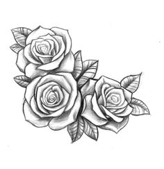 Drawn rose rose cluster Black Resultado three roses drawing
