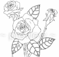 Drawn rose rose cluster Art Coloring Page Items Coloring