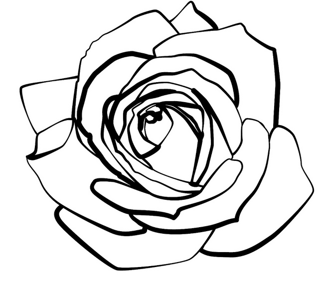 Drawn rose rose line Clip Rose Line Rose Line