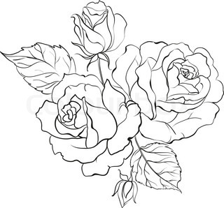 Drawn rose bush two Rose rose cartoon Vector design