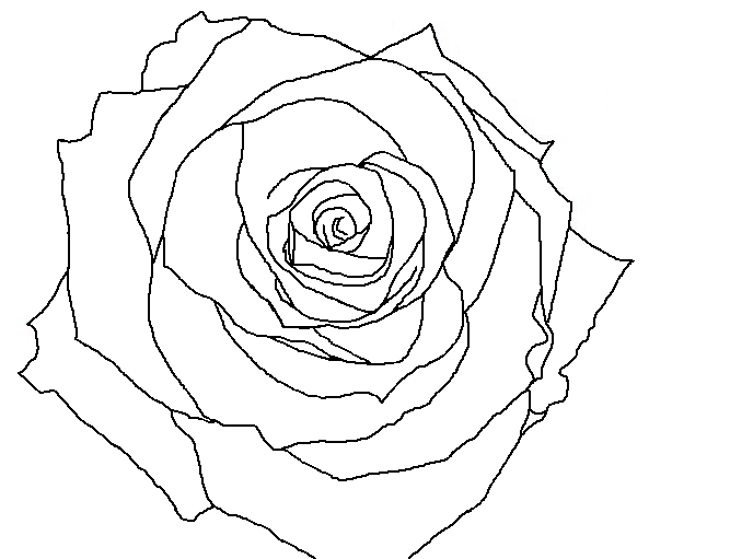 Drawn rose rose line Drawing for Image Library Art