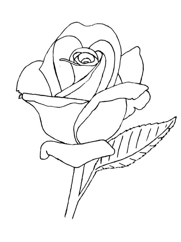 Drawn rose rose line On by Rose ideas drawings