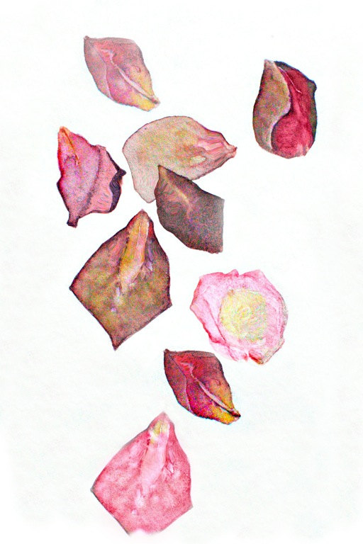 Drawn rose rose petal Items to Rose Field From