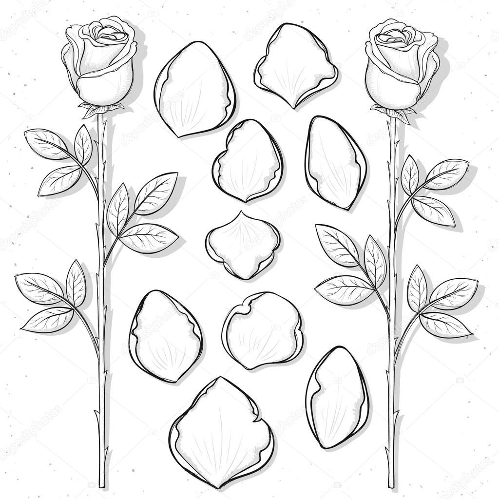Drawn rose rose petal Design rose style sketch petals