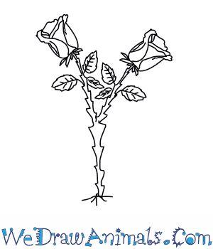 Drawn rose rose tree On to to 25+ Draw