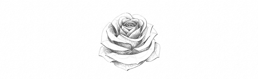 Drawn rose shaded Add Draw to How white