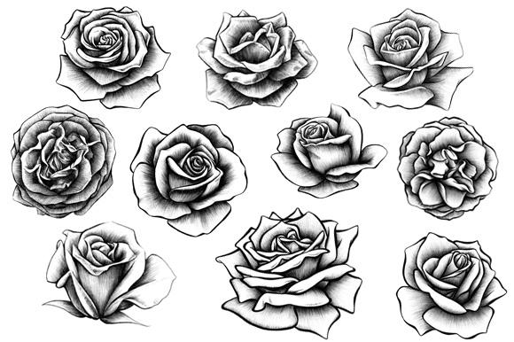 Drawn rose shaded Rose Illustrations  10