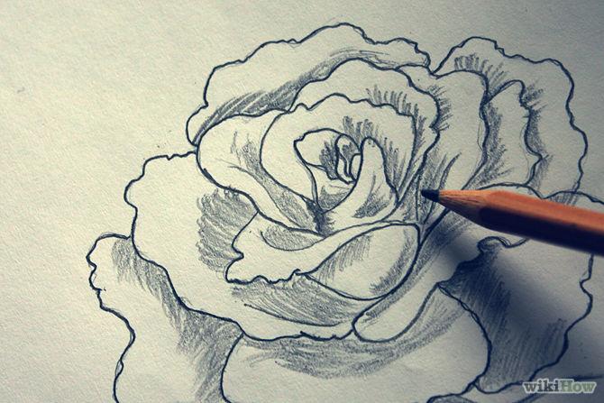 Drawn rose shaded Shade Shade  a Graphite