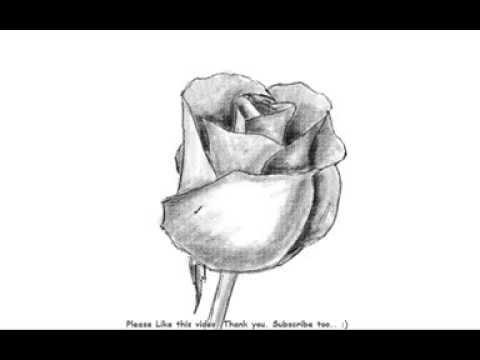 Drawn rose shaded Draw Rose Bud to Rose