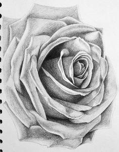 Drawn rose side  in Google Drawings Paintings