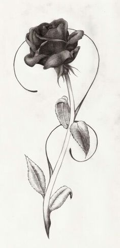 Drawn rose side Drawing vector  Flower For