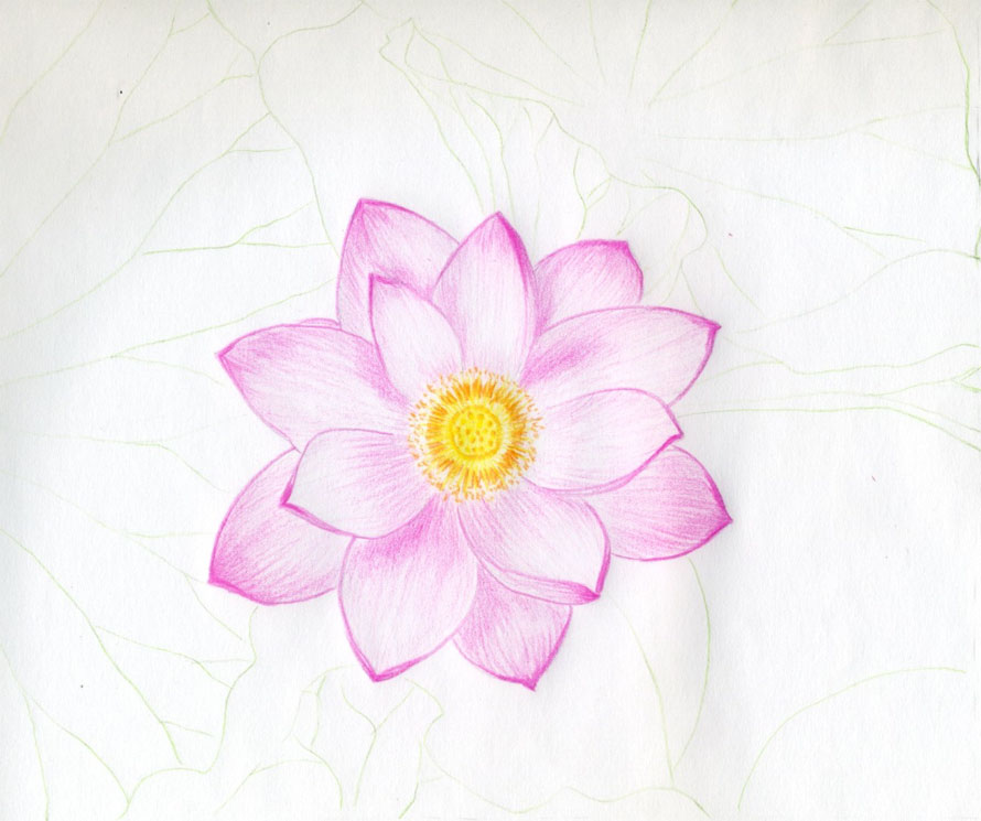 Drawn rose simple realism Full Drawings10 Pink  Rose
