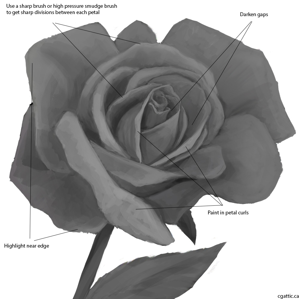 Drawn rose simple realism Rose from Guide: to Quick