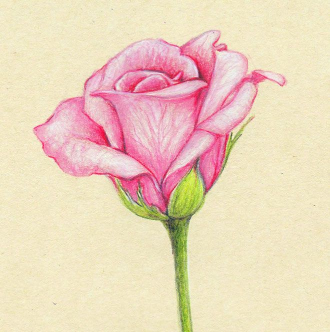Drawn rose simple realism Drawings and 25+ Rose Pencil