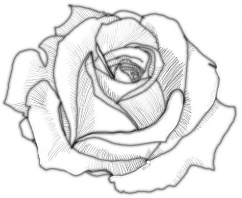Drawn rose sketching Ideas 1 25+ How draw