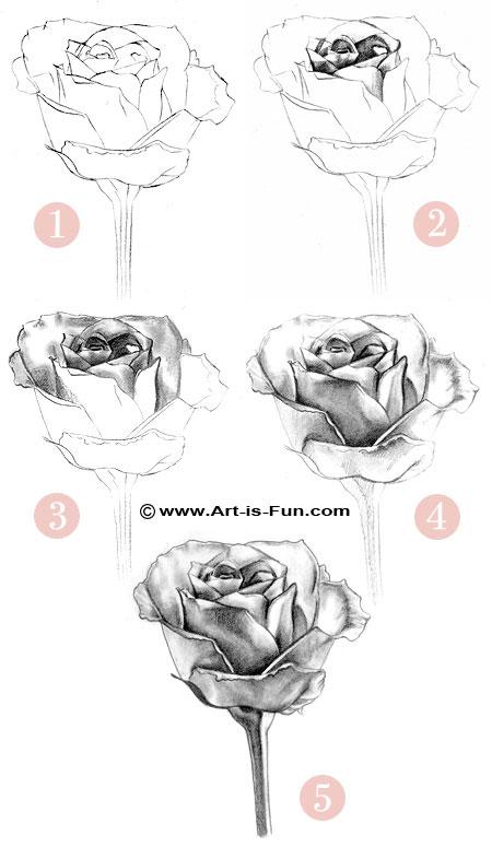 Drawn rose sketching Drawing Pencil Drawings to Art