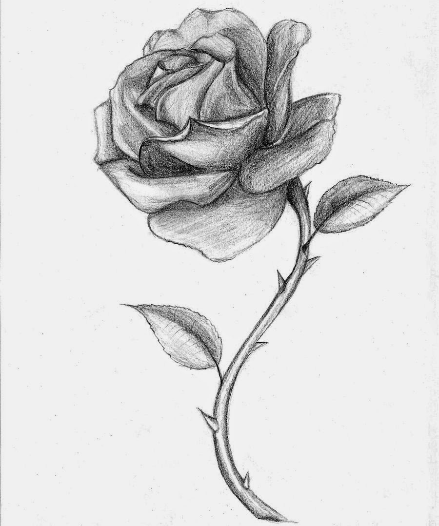 Drawn rose sketching Step5gif Sketchjpg Version Cute Rose