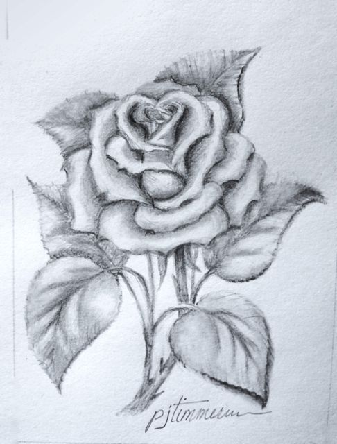 Drawn rose sketching Rose Pencil the rose Pinterest