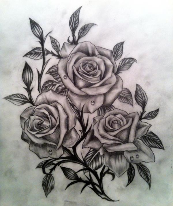 Drawn rose sketching Drawing Download  Of Roses